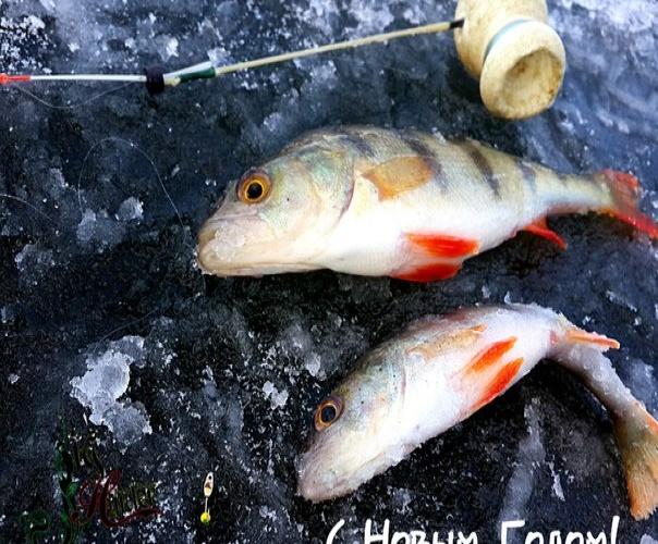 Рыболовный сезон 2016 открыт