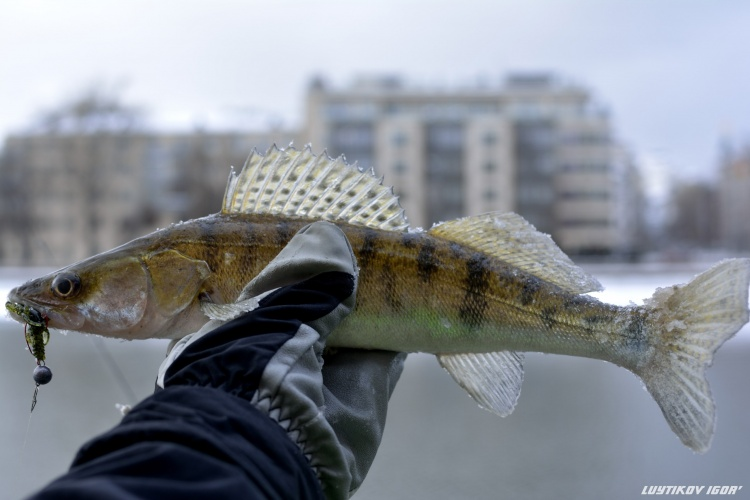 Рыбалка в центре Москвы