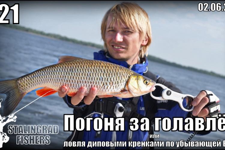 Погоня за голавлём или ловля диповыми кренками по убывающей Волге - 02.06.2016