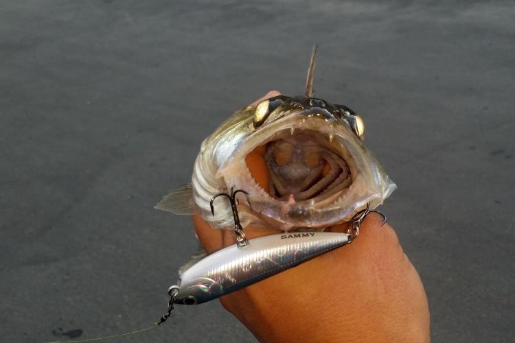 Не типичный Streetfishing