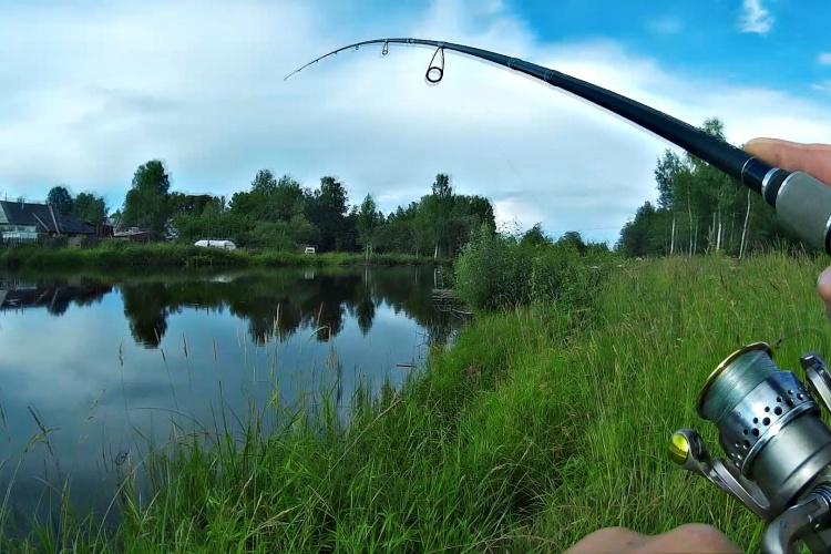 Ловля спиннингом на деревенском пруду