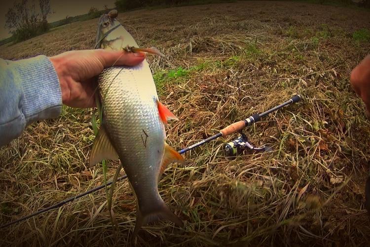 рыбалка как поймать голавля