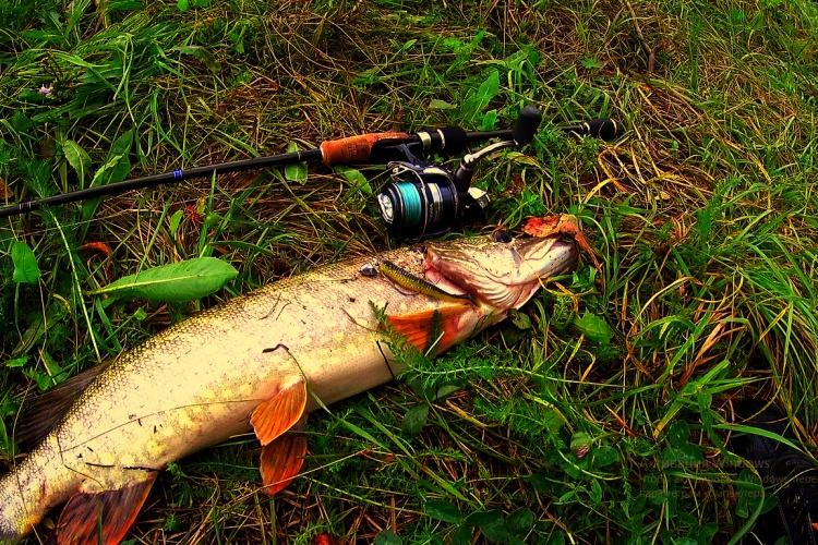 река вьюн рыбалка