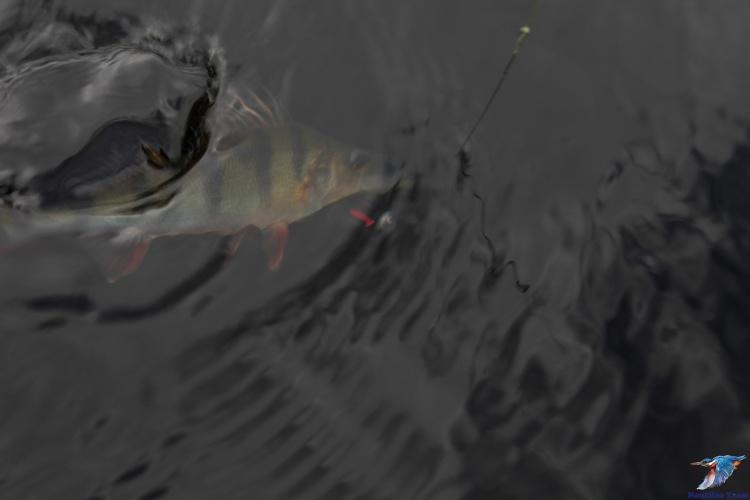 Рыбалка на Ладожском озере!