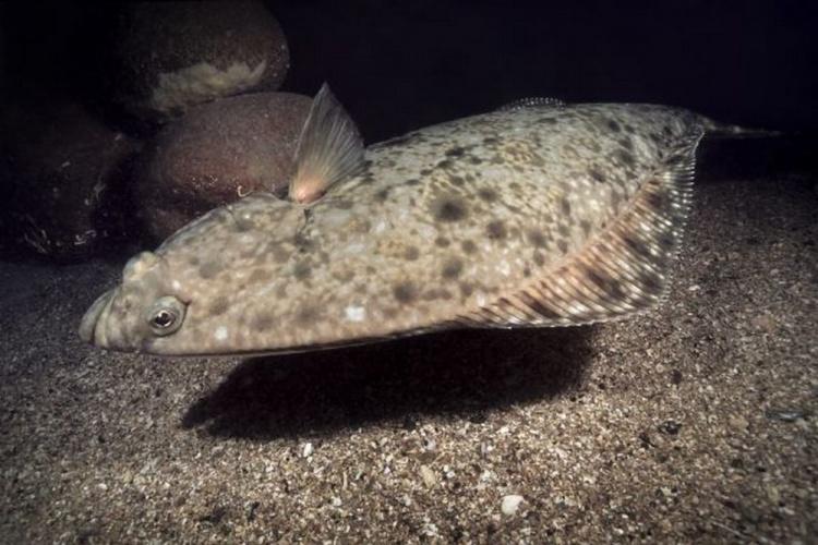 Палтус 120 кг на WFT Deep Water