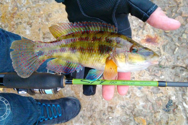 Рыбалка на ононе