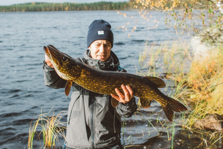 Щучий Vlog | Предпоследняя рыбалка сезона | Зубастая 4,1 кг на резину K.P.Baits
