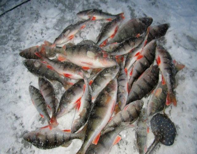 Проводка мормышек на Ладоге при зимней ловле