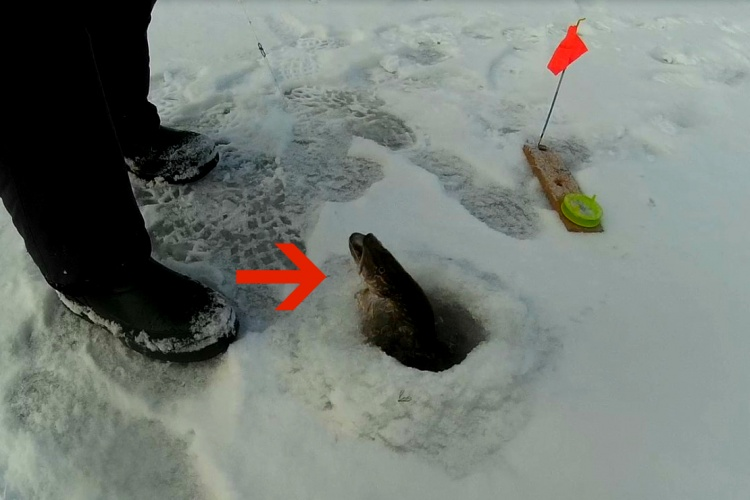 i наша рыбалка жерлица