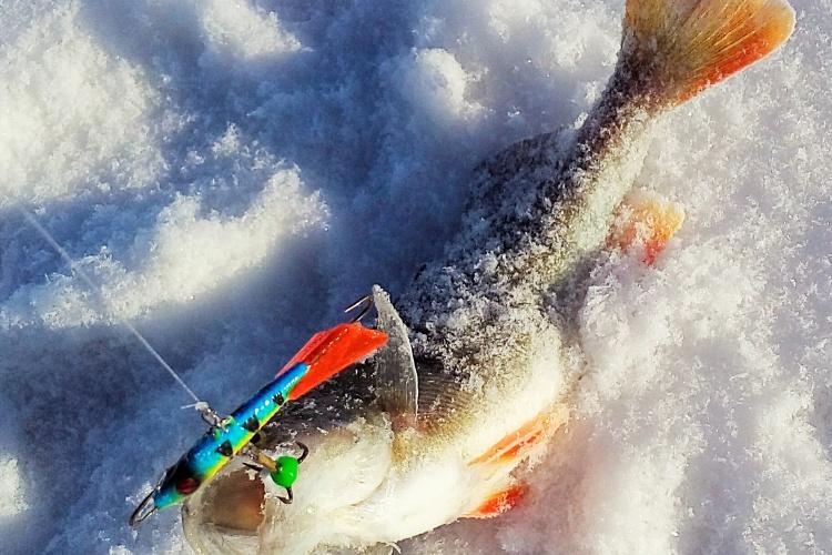 Рыбалка в морозный понедельник с балансирами Sprut.