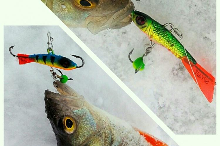 Рыбалка 23 февраля. Балансиры Sprut SHIMO и HIJARO.