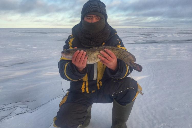Рыбалка на Онежском озере . Ловля налима на жерлицы и поставухи .
