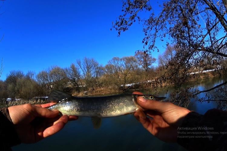сезон рыбалки спинингом