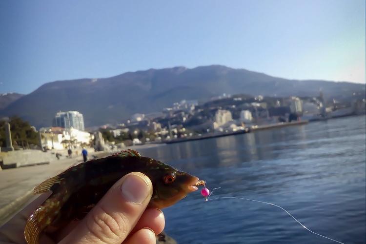 YaltaRockFish