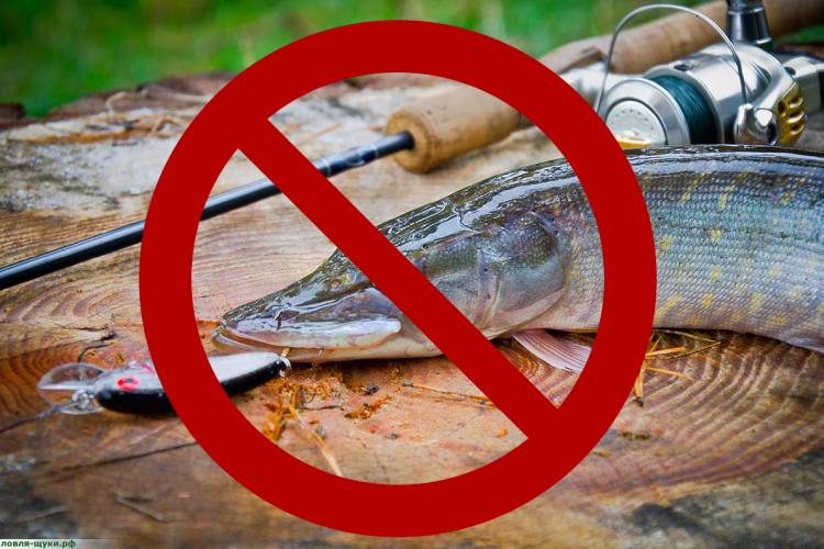 запреты на рыбалку в марте