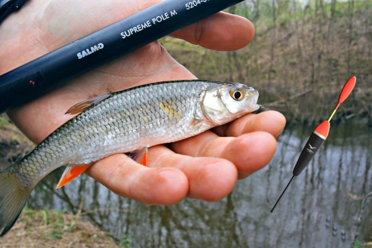 Рыбалка на поплавочную удочку.