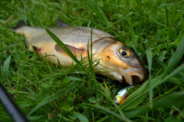 Спонтанная рыбалка
