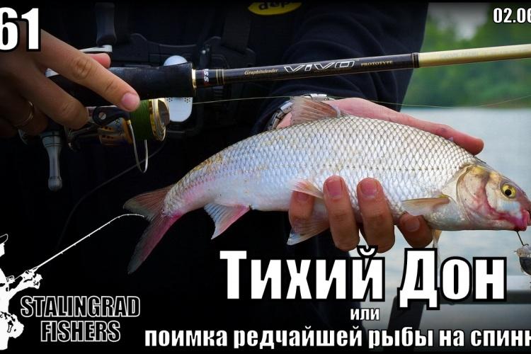 Тихий Дон или поимка редчайшей рыбы на спиннинг - 02.06.2017