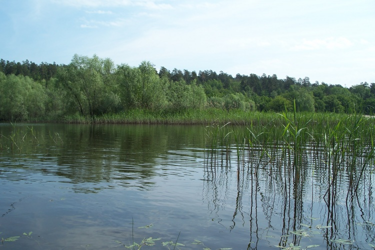 Волжский карась на фидер ,на Куйбышевском вдхр.