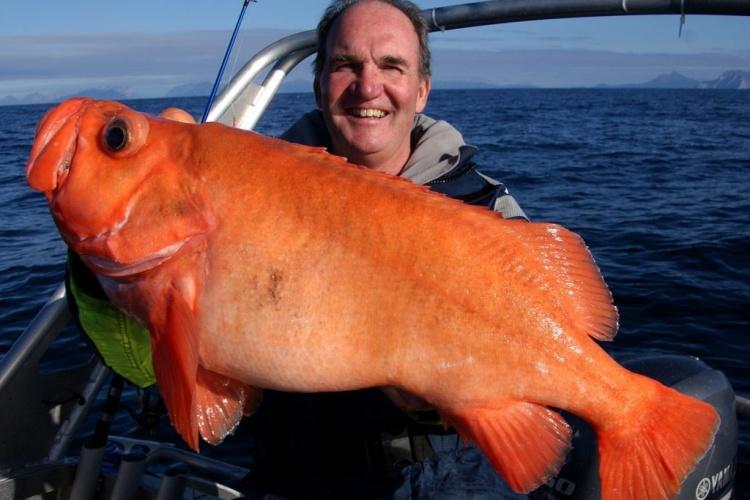 Автор Jenzi_Team: Рыбалка в Норвегии вблизи острова Фройя