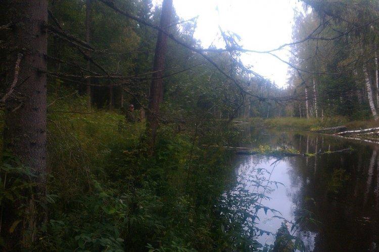 Осенний день на речке