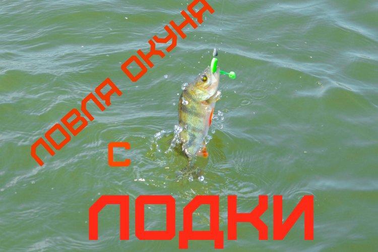 """Ловля окуня с лодки. Рыбалка на """"большой"""" воде."""