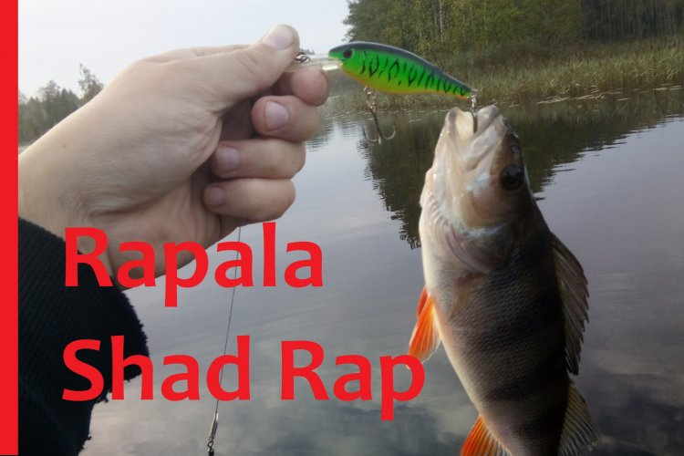 Карелия 2017 Рыбалка на Rapala Shad Rap c Алиэкспресс