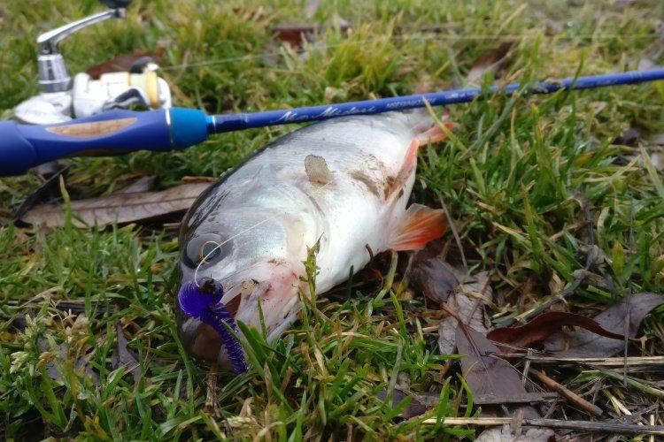 Удачная ноябрьская рыбалка