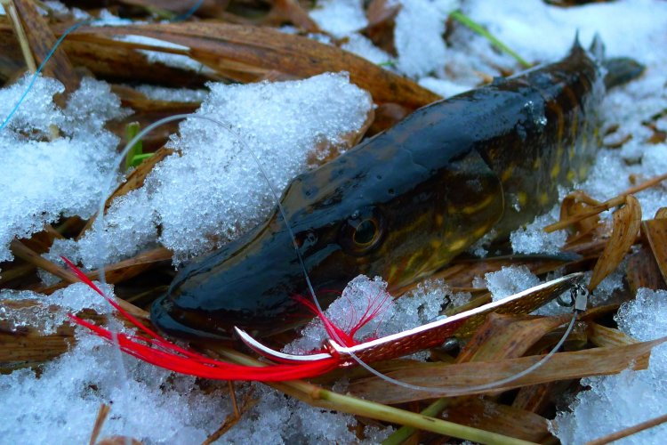 Флюорокарбоновый поводок для ловли щуки.