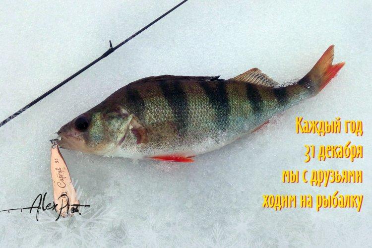 Каждый год 31 декабря мы с друзьями ходим на рыбалку.