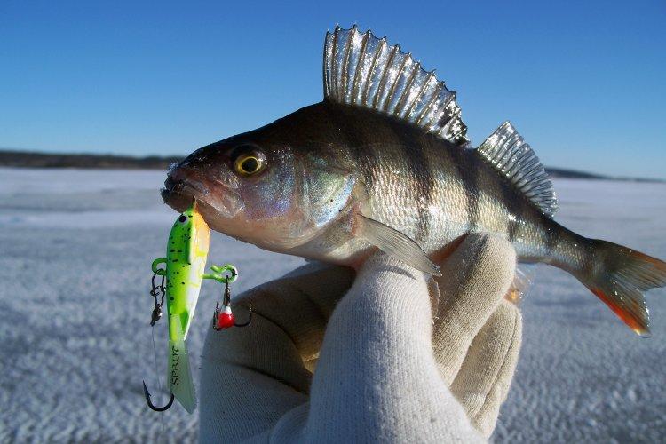 Новогодняя рыбалка с балансиром SPRUT TORU #5