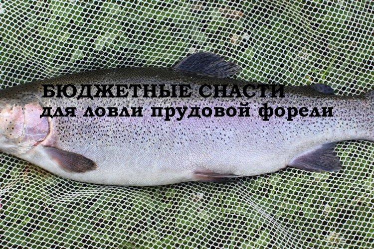 Бюджетные снасти для ловли прудовой форели