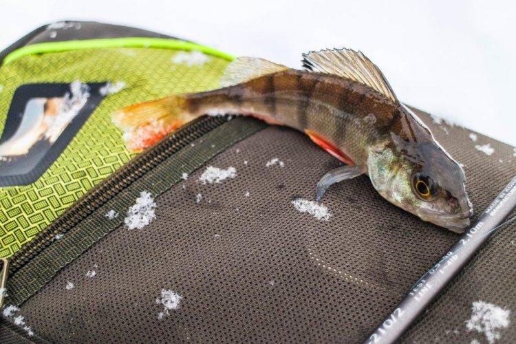 Рыбалка в городской черте