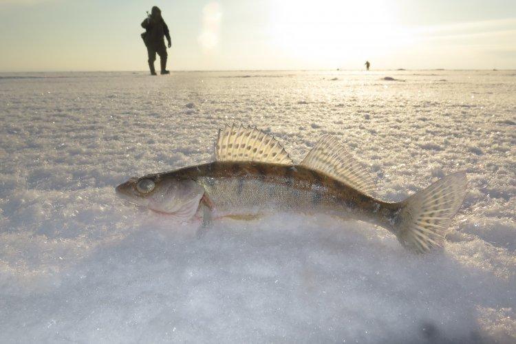 Подготовка к зимней рыбалке с EcoPro. ECOномим PROзапас.
