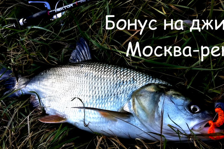 Бонус на джиг. Москва-река