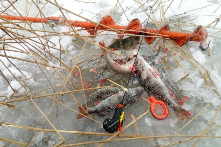 Зимняя рыбалка в Ладожских дебрях!