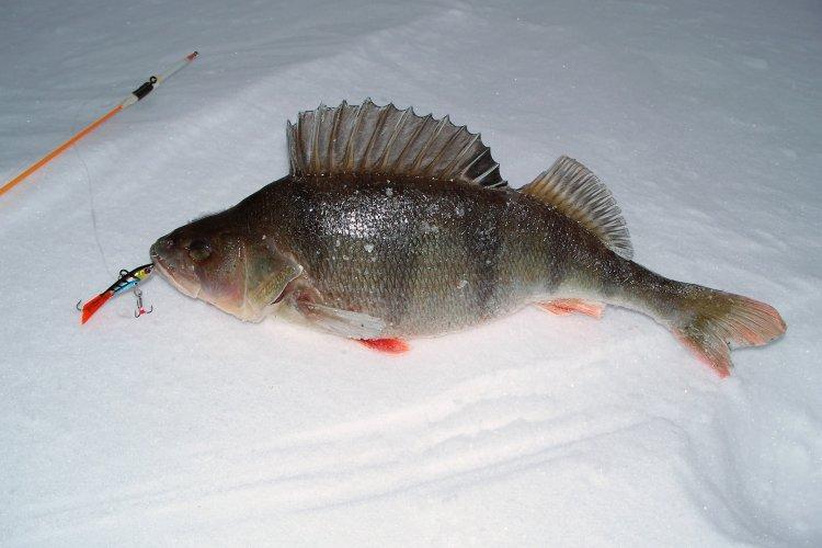 Масленничная рыбалка  с балансиром KANORI DUAL #5 от SPRUT