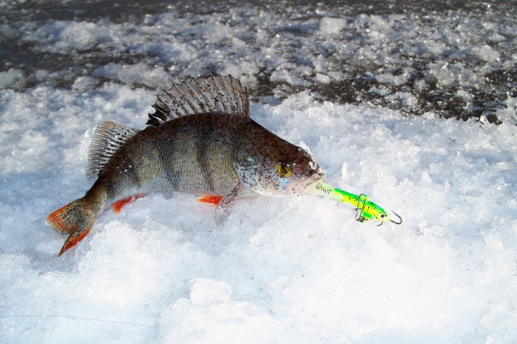 """Праздничная рыбалка с балансиром TORU#5 от TM """" SPRUT"""""""
