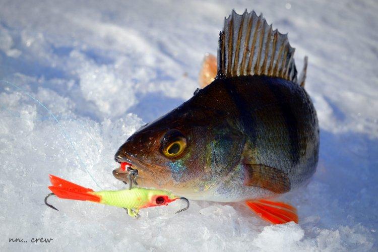 Первая весенняя рыбалка на Финском заливе