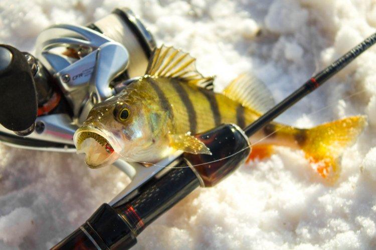 На рыбалку с Matagi