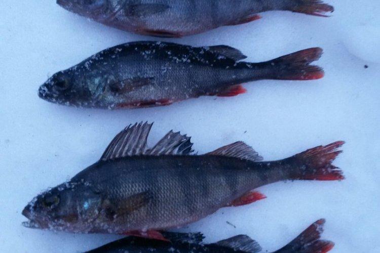 Трудовая рыбалка на Глубоком