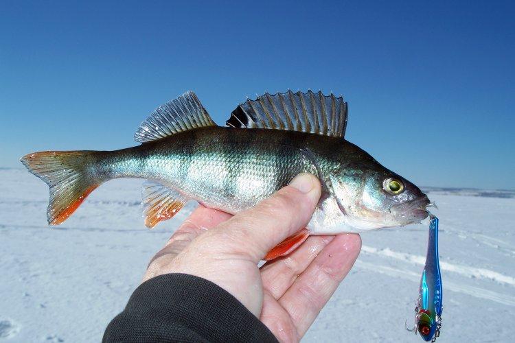 PRO должение знакомства рыбалкой виба ARISAKA 65 от ECOPRO