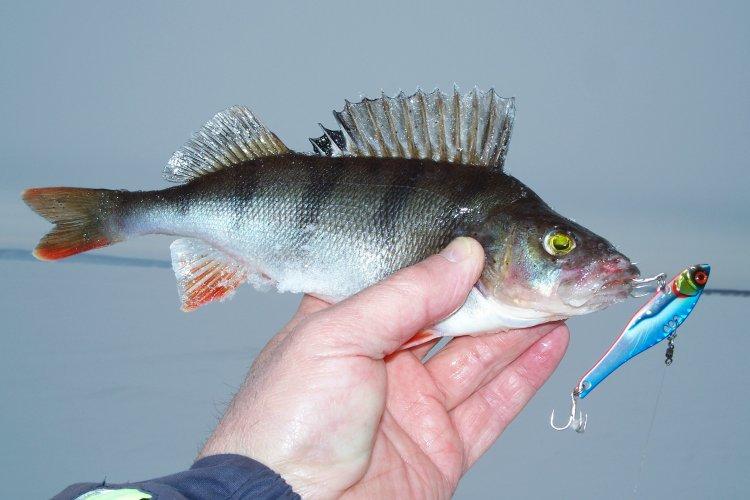 Рыбалка PRO веренным  вибом ARISAKA 65 от ECOPRO.