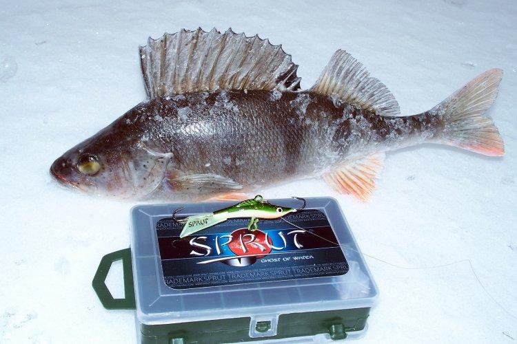 Весенне-зимняя рыбалка балансиром SPRUT MIKARI #5 .