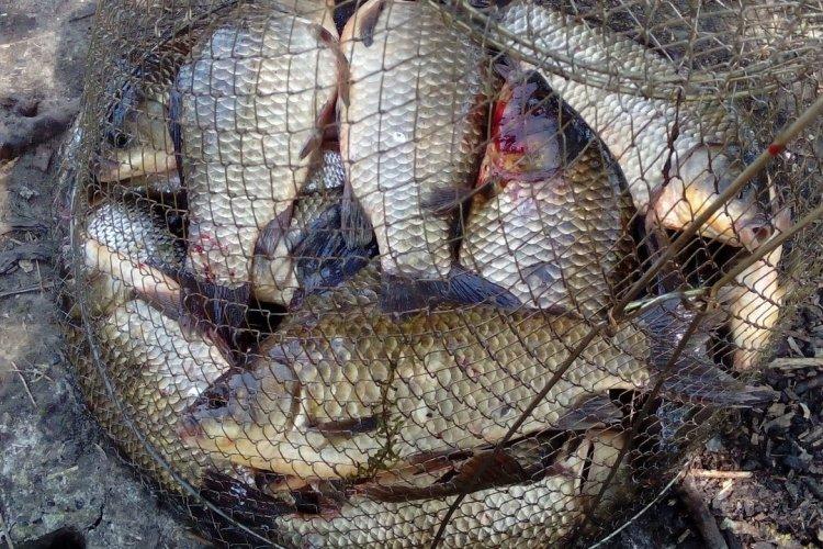 весеняя рыбалка на чулыме