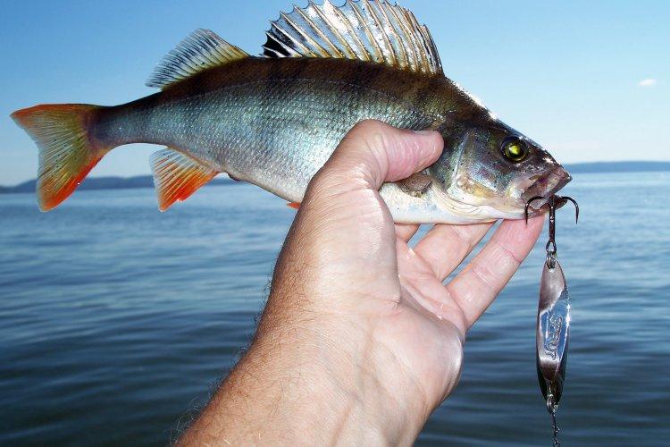 Рыбалка в жаркую погоду на Куйбышевском вдхр.