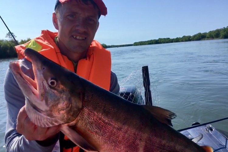 Камчатский лосось