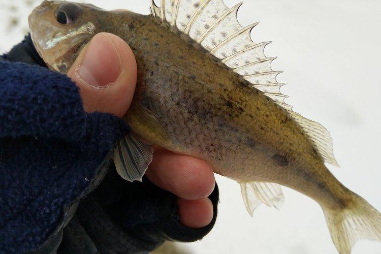 Зимняя рыбалка 2019. Начало сезона.