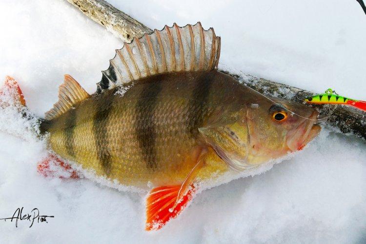 Рыбалка на родной речке. Четыре вида рыб на балансир.